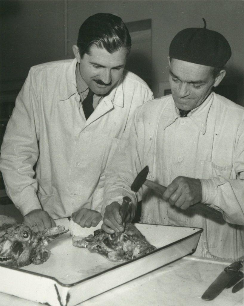 Dr. Szabó István munka közben