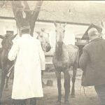 A keszthelyi lókórház 1918-ban