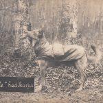 Hadikutya 1916