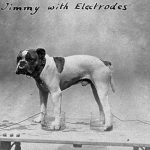 Jimmy with electrodes (Source: Wellcome Collection)